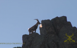 Spanish Ibex Hunting - GOLD TROPHY