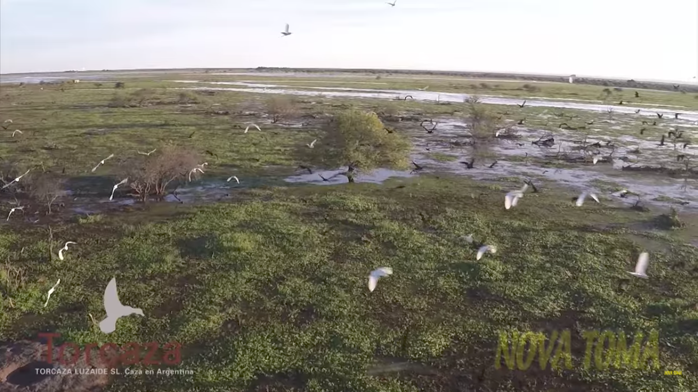 TORCAZA El Paraiso de la Caza Menor en Argentina