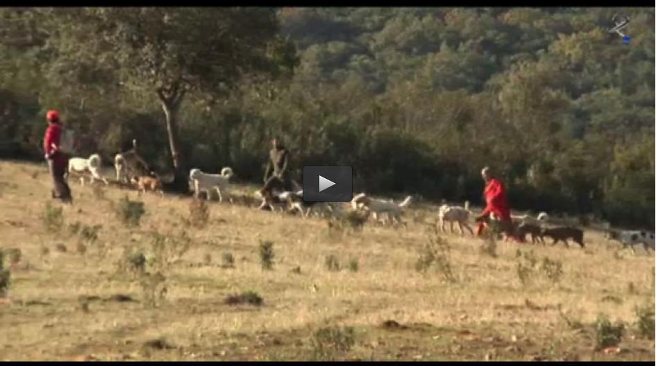 MONTERÍA EN MADAVIEJA Y CAZA DE CONEJOS AL SALTO ENTRE AMIGOS (17/02/13)