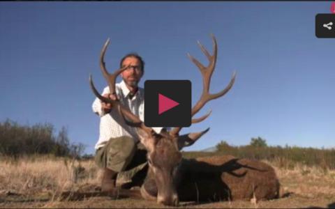 Montería en Cuaternos - cazando zorros con el Legionario