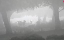 Rececho de muflón tras la niebla - Galgos y liebres en Torre Alta (15/04/18)